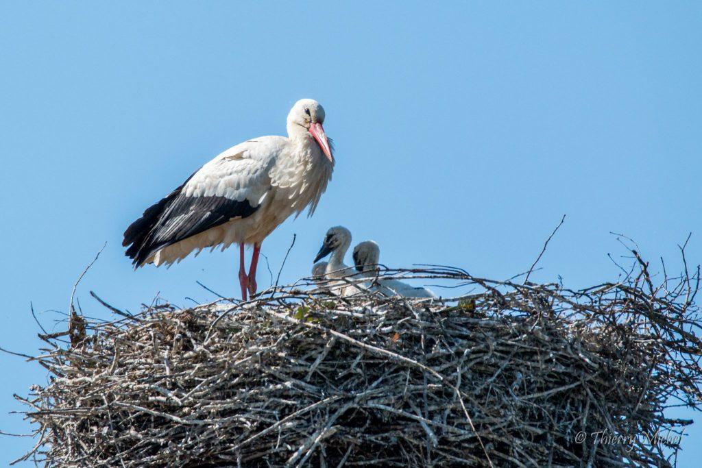 La mère et ses petits !